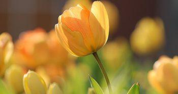 יתרונות של פרחים מלאכותיים בגינה