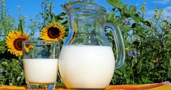 חלב רגיל או אורגני – מה האנשים מעדיפים